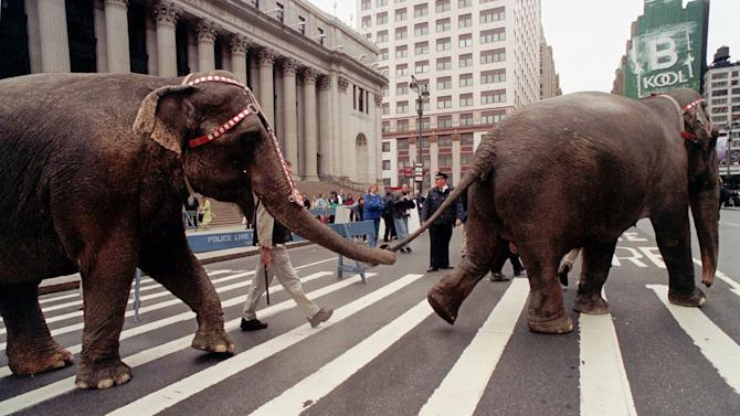 FILE - In this April 9, 1999 file photo, a pair of Ringling Brothers and Barnum and Bailey Circus elephants cross Eighth Avenue in front of the Main Post Office in New York.   The circus will phase out the show's iconic elephants from its performances by 2018, telling The Associated Press exclusively on Thursday, March 5, 2015 that growing public concern about how the animals are treated led to the decision.(AP Photo/Lynsey Addario)