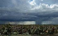 A rain cloud hangs over a flattened banana plantation in Compostela Valley province, in the aftermath of Typhoon Bopha, on December 8, 2012. Tropical Storm Wukong left five people dead and three missing as it cut through the central Philippines on Christmas Day, following devastating Bopha that killed hundreds earlier this month, according to officials