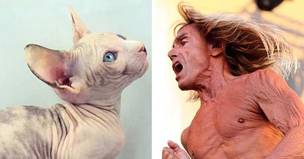15 Crazy Photos Of People Who Look Like Animals