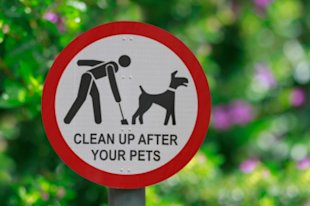 Dog Poop DNA Tests Track Down Violators