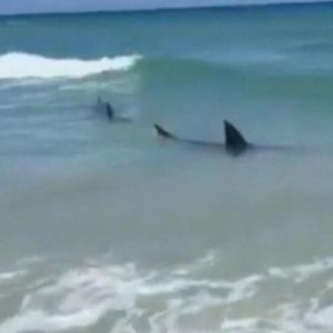 After string of shark attacks, are waters safe?