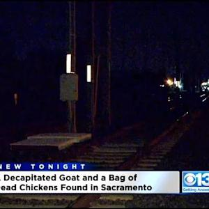 More Decapitated Animals In Sacramento