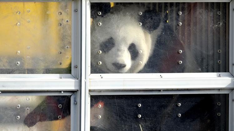 Giant panda Xing Hui arrives at Brussels airport