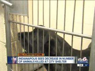 Shelter killing fewer animals for space