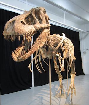 Smuggled Dinosaur's Return May Boost Mongolian Paleontology