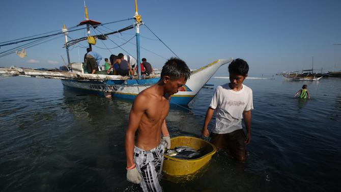 In this May 7, 2013 photo, Filipino fishermen bring their fish to shore in the coastal town of Infanta, Pangasinan province, northwestern Philippines. Since China took control of the Scarborough Shoal last year, which Beijing calls Huangyan Island, Filipino fishermen say Chinese maritime surveillance ships have shooed them from the disputed waters in the South China Sea and roped off the entrance to the vast lagoon that had been their fishing paradise for decades. Now, they say, they can't even count on the Chinese to give them shelter there from a potentially deadly storm. (AP Photo/Aaron Favila)