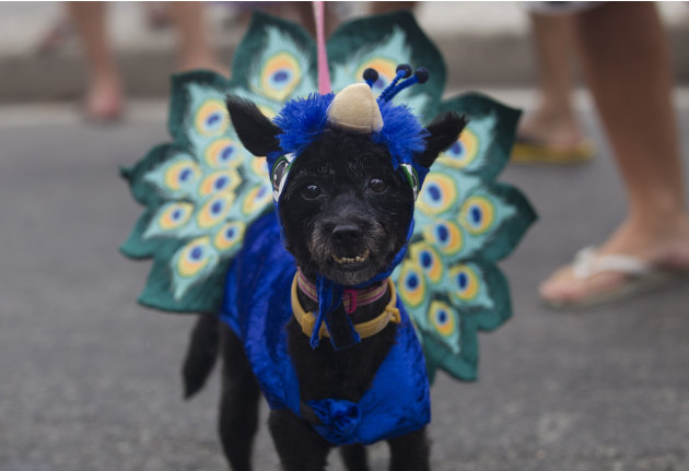 "A disguised dog is seen during the ""Blocao"" dog carnival parade in Rio de Janeiro, Brazil, Sunday, Feb. 3, 2013. According to Rio's tourism office, Rio's street Carnival this year will consist of 492"