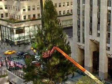 24 Hours Later, 30 Rock Tree Pulled to a Stand