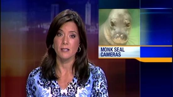 Hitting monk seal leads to man's sentencing