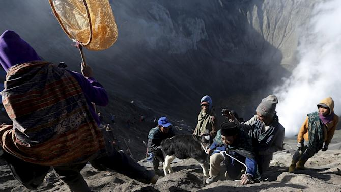 Villagers drag a cow to climb up after catching it shortly after Hindu worshippers threw the animal into the crater of Mount Bromo during the Kasada Festival in Probolinggo