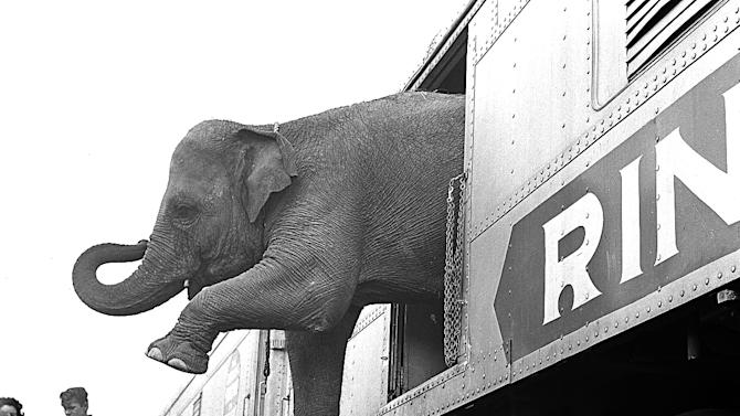 FILE - In this April 1, 1963 file photo, a Ringling Brothers Circus elephant walks out of a train car as young children watch in the Bronx railroad yard in New York.  The circus will phase out the show's iconic elephants from its performances by 2018, telling The Associated Press exclusively on Thursday, March 5, 2015 that growing public concern about how the animals are treated led to the decision.  (AP Photo)