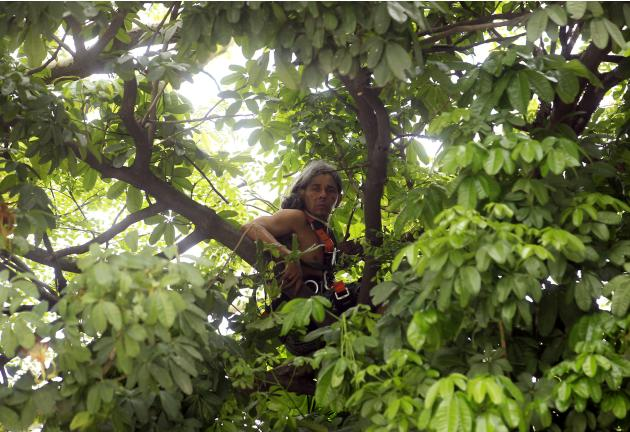 Urutau Jose Guajajara, who belongs to the native Indian community, looks out from the top of a tree inside the Indian Museum, next to the Maracana stadium, during his protest in Rio de Janeiro