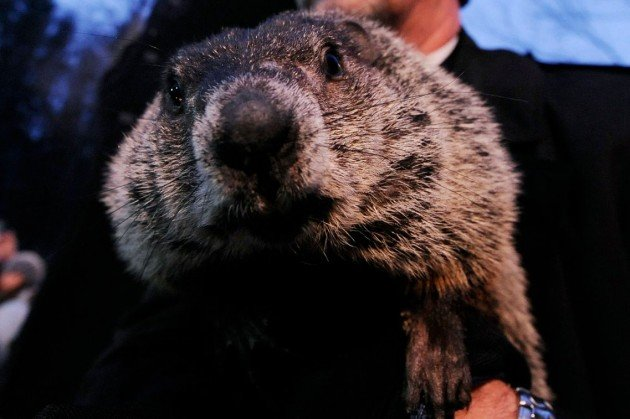 Punxatawney Phil, how could you (or your fellow groundhogs)? &#x2014; Getty