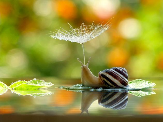 An adorable snail takes cover from the rain under a makeshift flower umbrella. The photo was snapped by Vyacheslav Mischenko, who specialises in macro-photography (Caters)