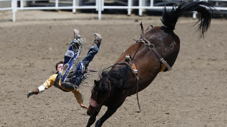 Shaver of Bezanson, Alberta flies off the horse Star Rocket in the novice bareback event during the Calgary Stampede rodeo