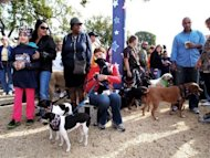 "Dog lovers at the second annual National Family Pack Walk on the National Mall in Washington, DC. The man they call the Dog Whisperer led hundreds of pet owners and their four-legged friends on a ""pack walk"" to raise election-year awareness of the plight of unwanted canines"