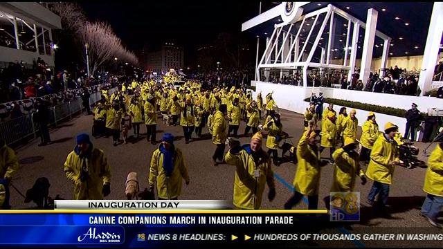 Canine companions march in inauguration parade