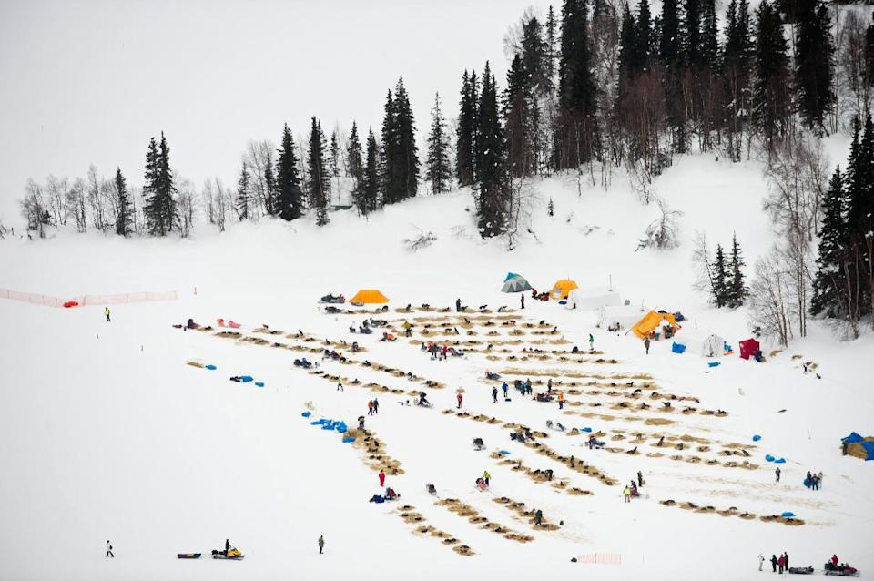 Competitors gather at the Finger Lake, Alaska, checkpoint of the Iditarod Trail Sled Dog Race on Monday, March 5, 2012. (AP Photo/Anchorage Daily News, Marc Lester)