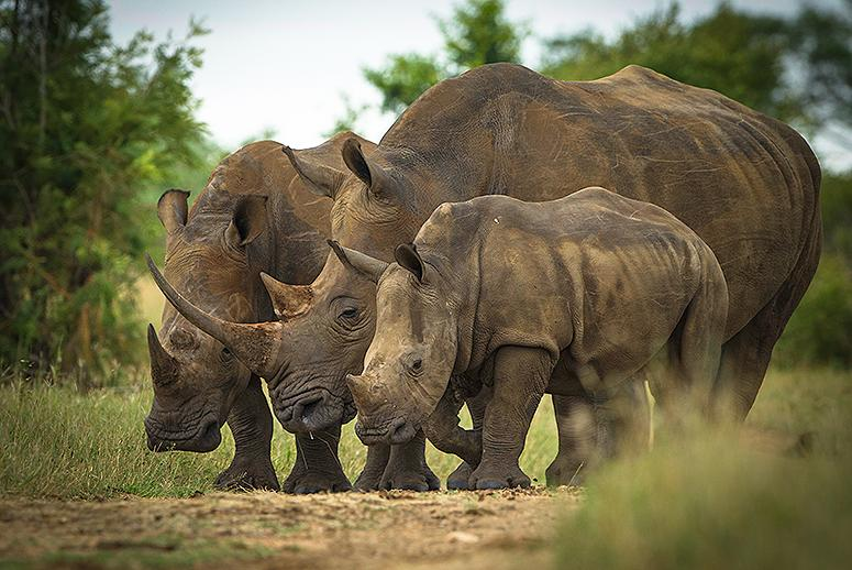 This Could Be the Worst Year Yet for Rhino Poaching