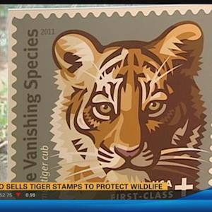 San Diego Zoo sells tiger stamps to protect wildlife