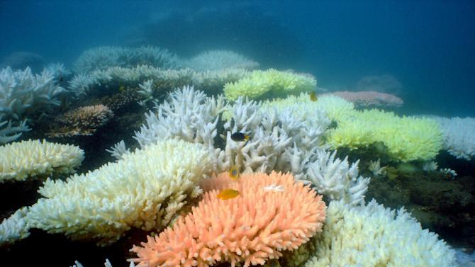 An undated handout photo received from the Australian Institute of Marine Science on October 2, 2012 shows bleaching on a coral reef at Halfway Island in Australia's Great Barrier Reef