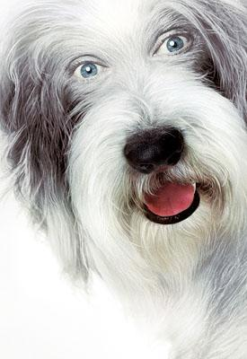 Walt Disney Pictures' The Shaggy Dog