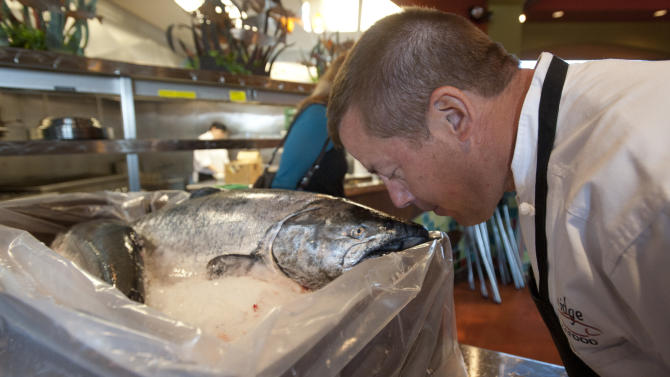 """Chef Al Levinsohn gets a sniff of one of the the season's first Copper River King Salmon Friday, May 18, 2012 at his Anchorage, Alaska restaurant.  The 30-pound king, along with a seven-pound sockeye were flown from the fishing grounds of Cordova, Alaska where they were caught the night before.  """"When you can't smell anything, you know it's fresh"""", Levinsohn said .  (AP Photo/Michael Dinneen)"""