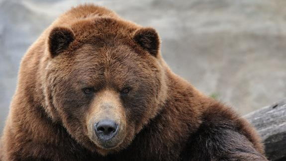 Bears Not Attracted to Menstruating Women