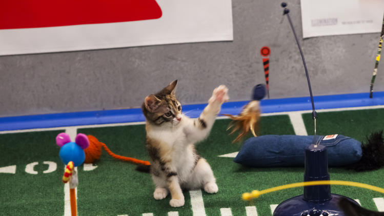 "File-This undated publicity file photo provided by Animal Planet shows the Kitty half time show during ""Puppy Bowl IX,"" in New York. The inaugural Kitten Bowl will be shown on the Hallmark Channel. The show is part of Hallmark's Pet Project Initiative and will be done with partner American Humane Association. (AP Photo/Animal Planet, Keith Barraclough,File)"