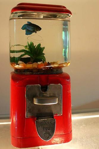 Fish Bowl Machine