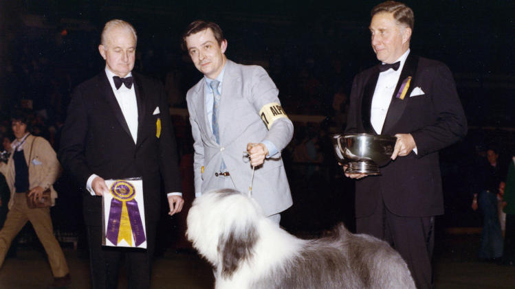 This 1975 photo provided by the Westminster Kennel Club shows the Westminster Best In Show winner, Sir Lancelot of Barvan. Sheepdogs have been recognized by the American Kennel Club since the late 1800's and won best in show at Westminster in 1914 and 1975. Breeders in the United States and England are concerned about the drop in the number of purebred sheepdog puppies registered in the two countries each year, as more owners choose smaller dogs like pocket pets and designer puppies. (AP Photo/Westminster Kennel Club)