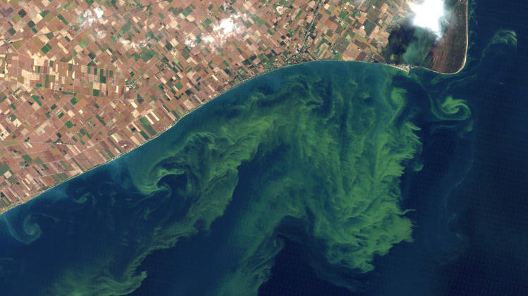 This Oct. 5, 2011 satellite photo from a NASA website shows algae blooms swirling on Lake Erie. A study released Monday, April 1, 2013 said the warming climate and modern farming practices are creating ideal conditions for gigantic algae formations on Lake Erie. The shallowest and southernmost of the Great Lakes, Erie contains just 2 percent of their combined waters but about half their fish. (AP Photo/NASA)