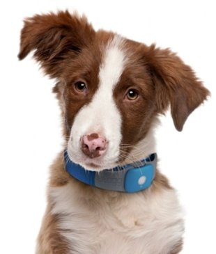 gps and wireless pet trackers
