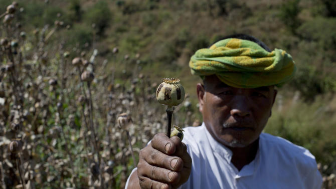 FILE - In this Feb 19, 2013 file photo, ethnic Pa-O poppy farmer holds a harvested poppy stem with dried-up opium sap in a poppy cultivation in central Shan state, Myanmar. Official efforts to stamp out opium production in Myanmar are falling flat because poor farmers don't have alternative ways to make a living, a U.N. agency said Wednesday, Dec. 18, 2013. The U.N. Office on Drugs and Crime estimated in its annual Southeast Asia Opium Survey that Myanmar will produce 870 metric tons of opium in 2013, remaining the world's second-largest grower after Afghanistan. That would be a 26 percent rise over 2012 production. (AP Photo/Gemunu Amarasinghe, File)