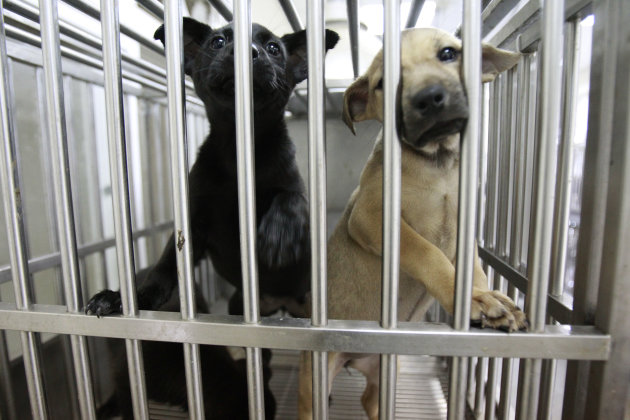 In this photo taken on Monday, April 9, 2012, puppies beg for attention at a government-run shelter in Taoyuan, northern Taiwan. In an ongoing project, Taiwanese photographer Tou Chih-kang makes portr