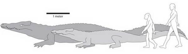 Ancient Crocodile Was World's Largest