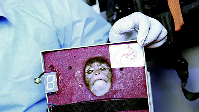 CAPTION CORRECTION, REMOVES SECOND SENTENCE AND ADDS NEW INFORMATION THAT THE MONKEY DEPICTED IN THE PHOTO IS NOT THE SAME ONE THE IRANIANS SENT INTO SPACE - In this picture obtained from the Iranian Students News Agency, ISNA, scientists surround a monkey ahead of a space launch in an undisclosed location in Iran. One of two official packages of photos of Iran's famed simian space traveler depicted the wrong monkey, but a primate really did fly into space and return safely to Earth, a senior Iranian space official confirmed Saturday. One set of pictures showed a relatively dark-haired monkey. Another showed a different monkey, the one shown in this photo, strapped in a pod, that had light gray hair and a distinctive red mole over its right eye. State TV pictures seen by AP show the dark-haired monkey before and after the space flight, but a package of still pictures released by authorities showed the above monkey with the mole.   (AP Photo/ISNA, Mohammad Agah)