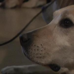 Argentina's Drug-Sniffing Dogs Get A Retirement Party