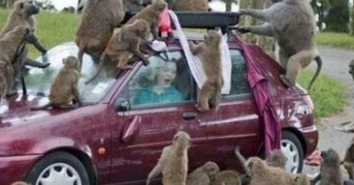These 14 Poor Idiots Decided To Mess With Nature