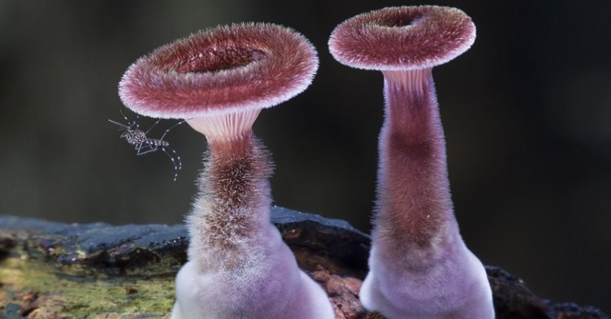 20+ Mushrooms That You Never Knew Exist