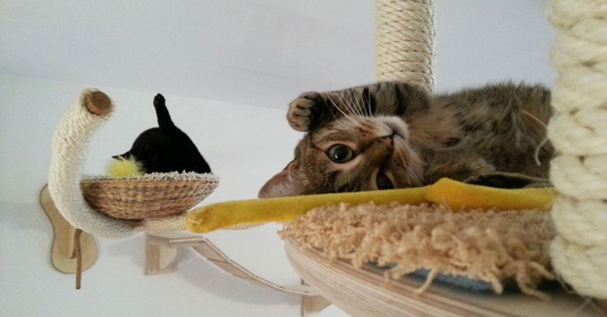 23 Most Creative Pieces Of Feline Furniture