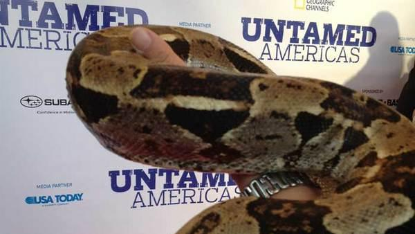 Nat Geo's 'Untamed Americas' Shows Off Amazing Wildlife