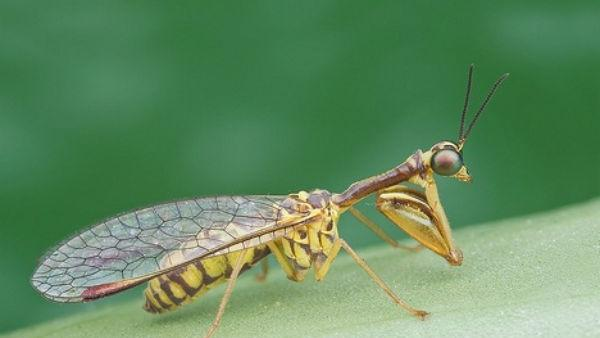 Flickr Photo of Insect Identified As Never-Before-Seen Species [VIDEO]