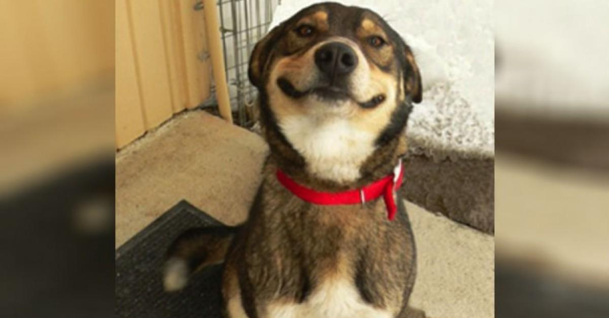 17 Pics Of Dogs Smiling