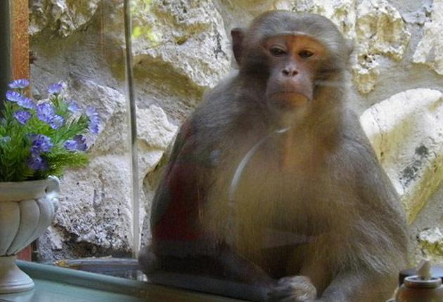 The Mystery Monkey of Tampa Bay