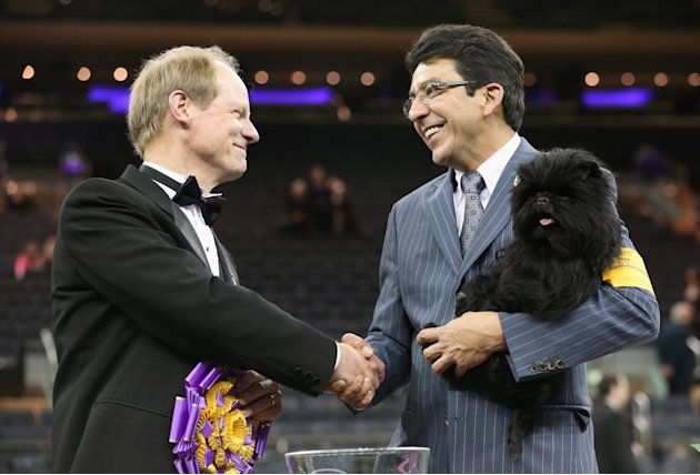 Westminster Kennel Club Dog Show Crowns King Of The Canines