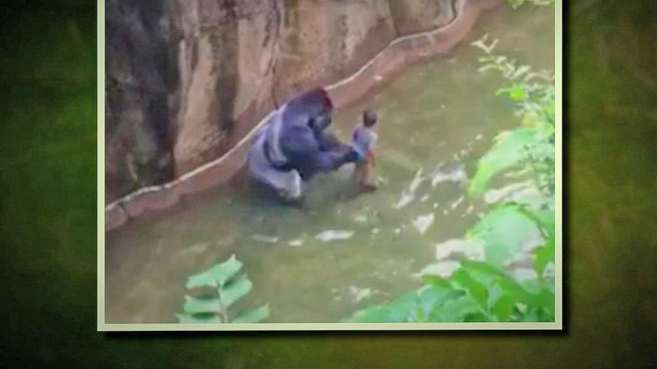 4-Year-Old Who Fell Into Cincinnati Zoo's Gorilla Enclosure Expected to Recover