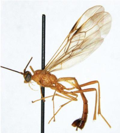 Kiddo Wasp Named for 'Kill Bill' Assassin