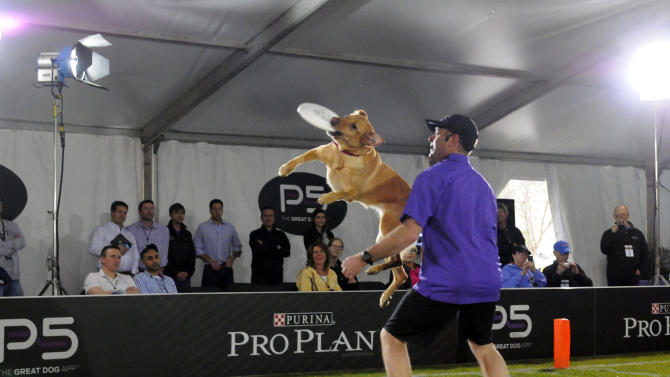 Purina Pro Plan Performance Team trainer John Casey puts on a high-flying show during The Purina Pro Plan Canine Combine, on Wednesday, Jan. 30, 2013 in New Orleans, LA.  (Photo by Cheryl Gerber/Invision for Purina Pro Plan/AP Images)