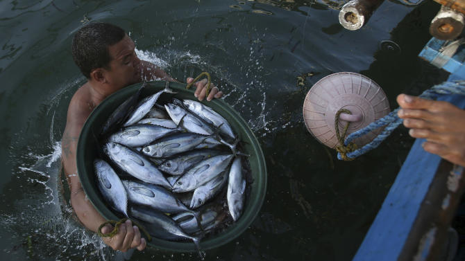 In this May 7, 2013 photo, a Filipino fishermen carries a load of fish from a boat in the coastal town of Infanta, Pangasinan province, northwestern Philippines. Since China took control of the Scarborough Shoal last year, which Beijing calls Huangyan Island, Filipino fishermen say Chinese maritime surveillance ships have shooed them from the disputed waters in the South China Sea and roped off the entrance to the vast lagoon that had been their fishing paradise for decades. Now, they say, they can't even count on the Chinese to give them shelter there from a potentially deadly storm.  (AP Photo/Aaron Favila)